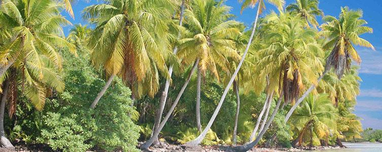 матрасы с кокосом